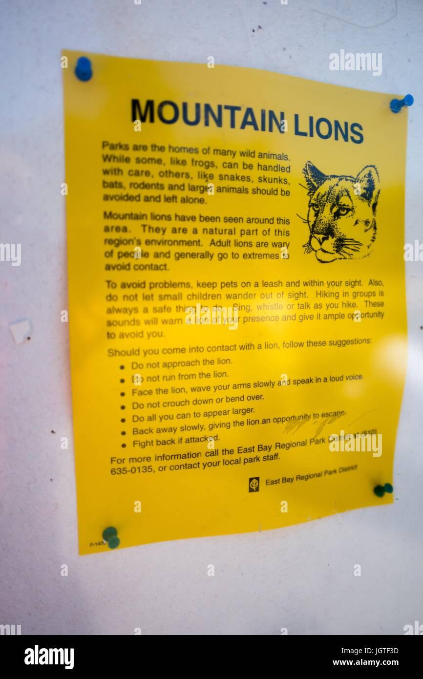 Poster about the dangers of mountain lions, June 30, 2017. - Stock Image