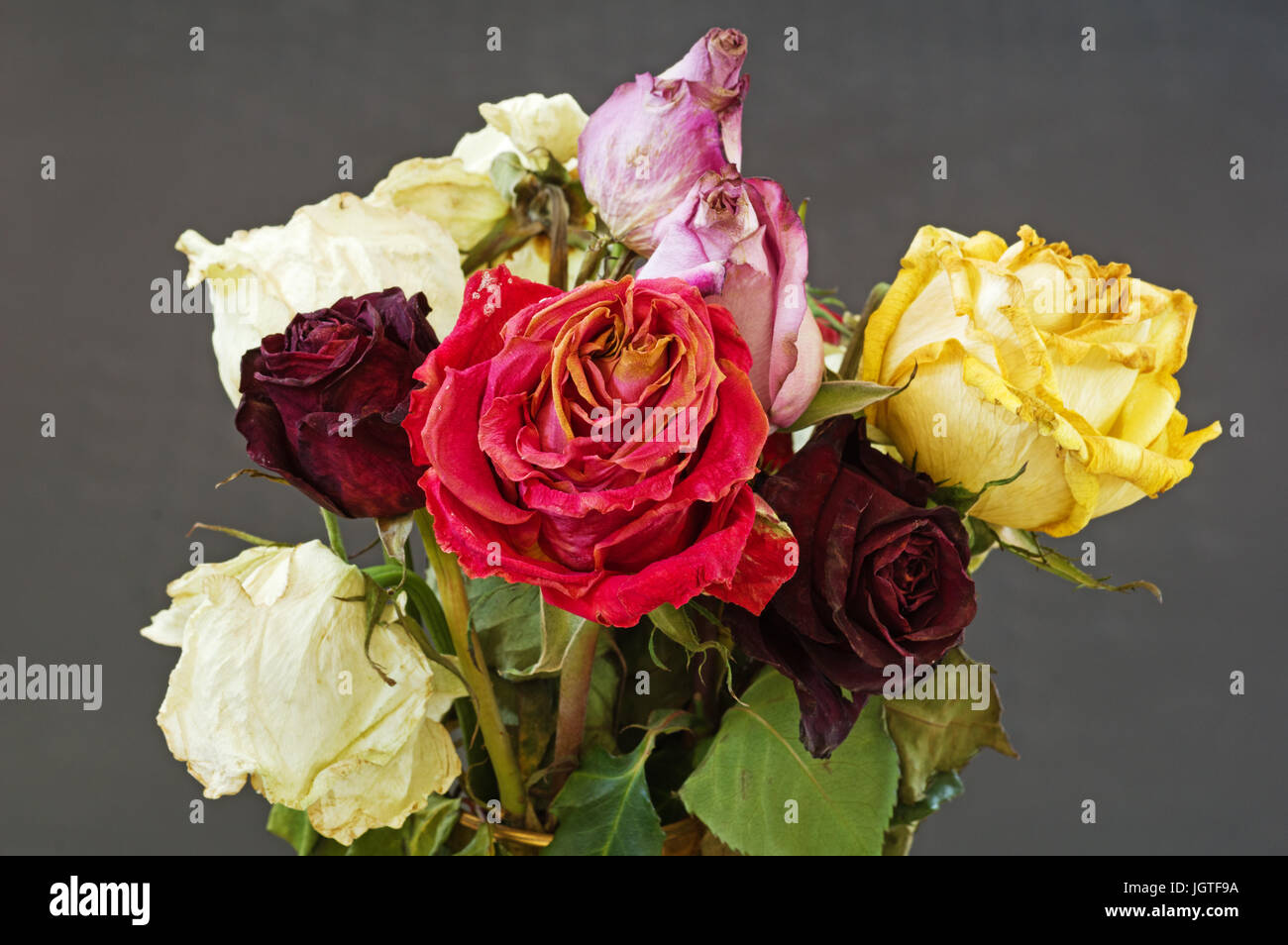 Wilted bouquet stock photos wilted bouquet stock images alamy a bouquet of old dried wilted roses with a gray background stock image izmirmasajfo