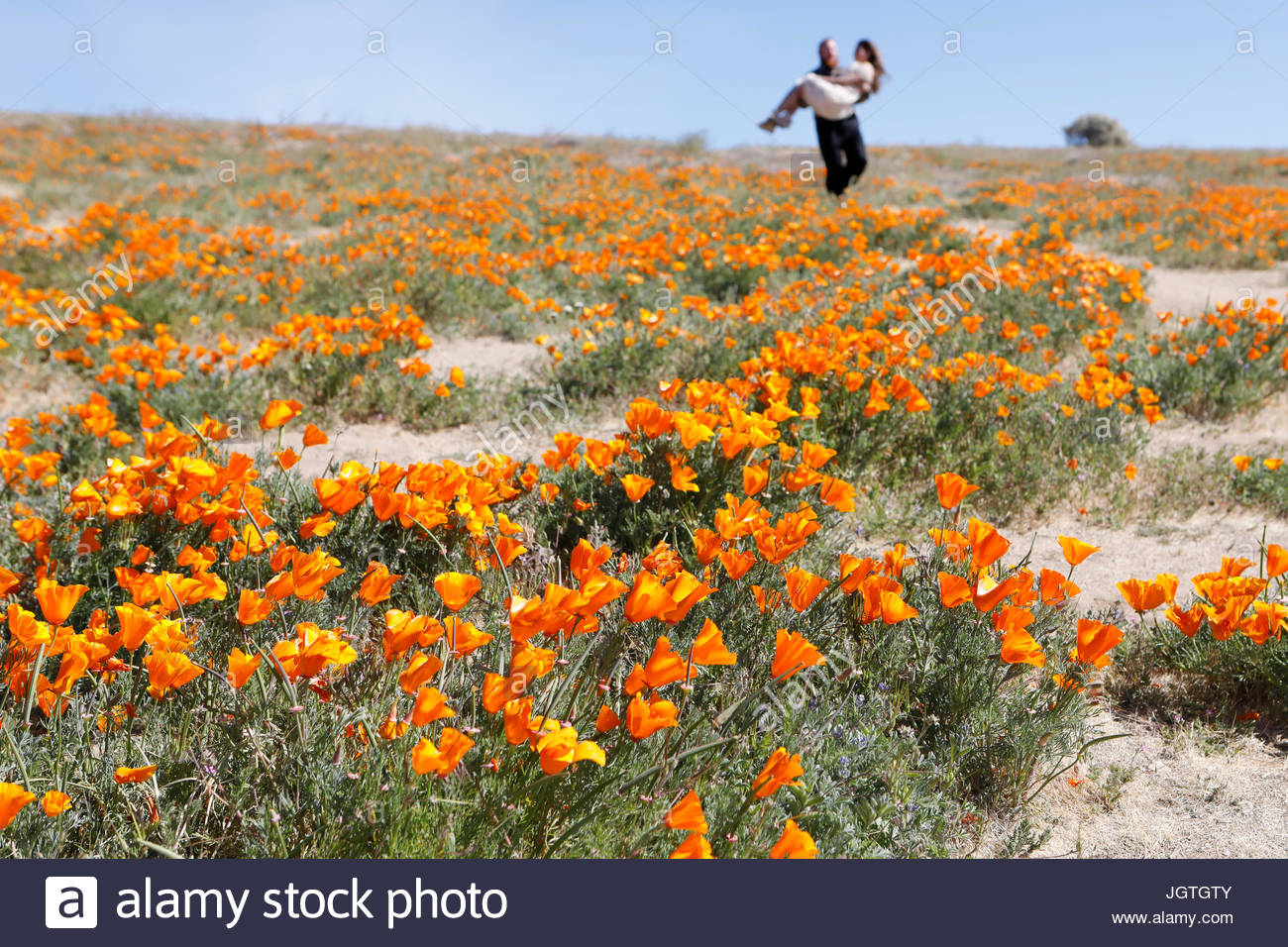 A man carries his wife down a hill at Antelope Valley California Poppy Reserve. - Stock Image