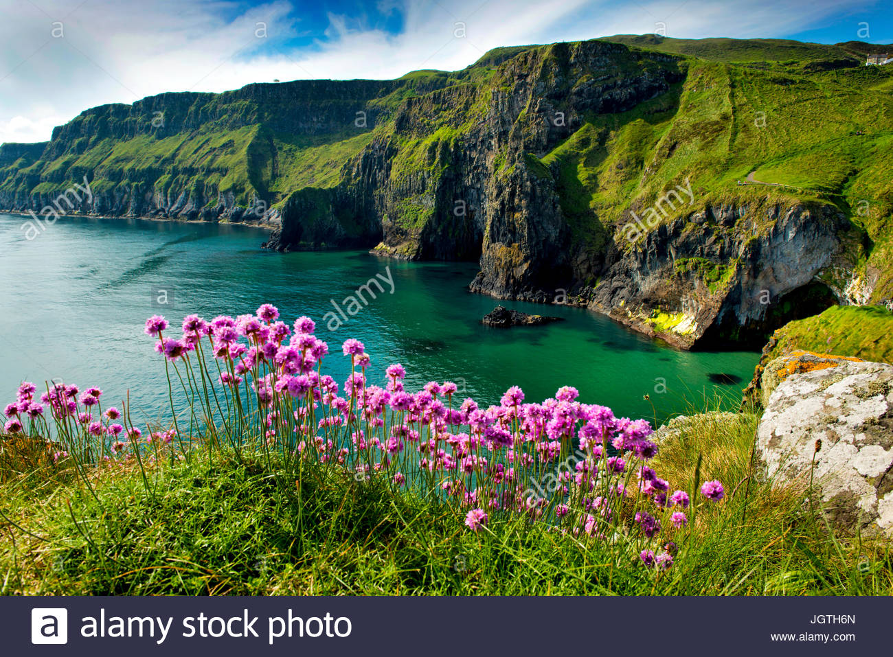 Sea pinks bloom on a cliff edge at Carrick-a-rede. - Stock Image