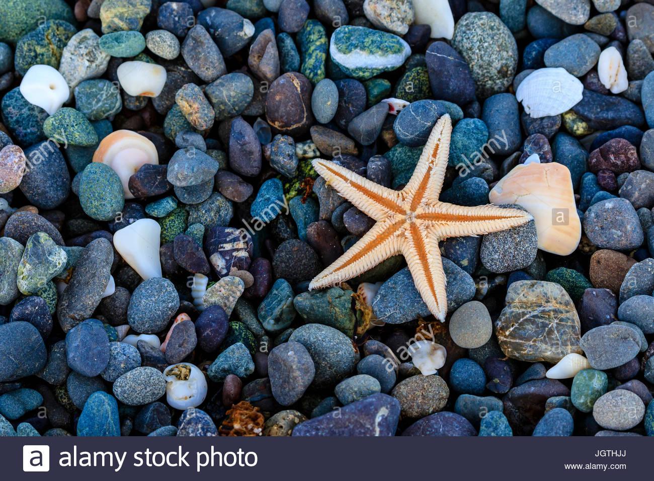 Sea star on colorful beach rocks. - Stock Image
