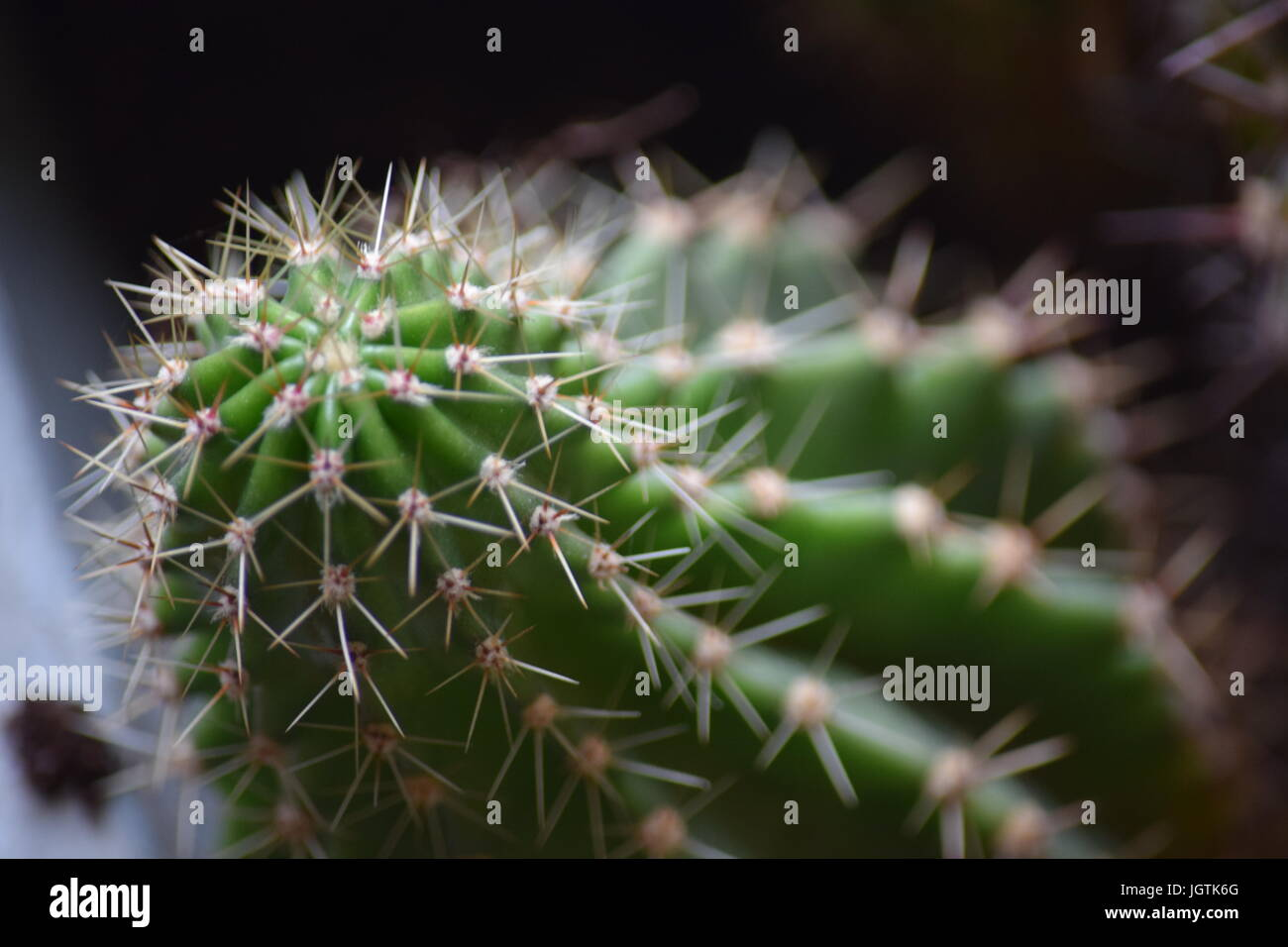 Spines of cactus - Stock Image