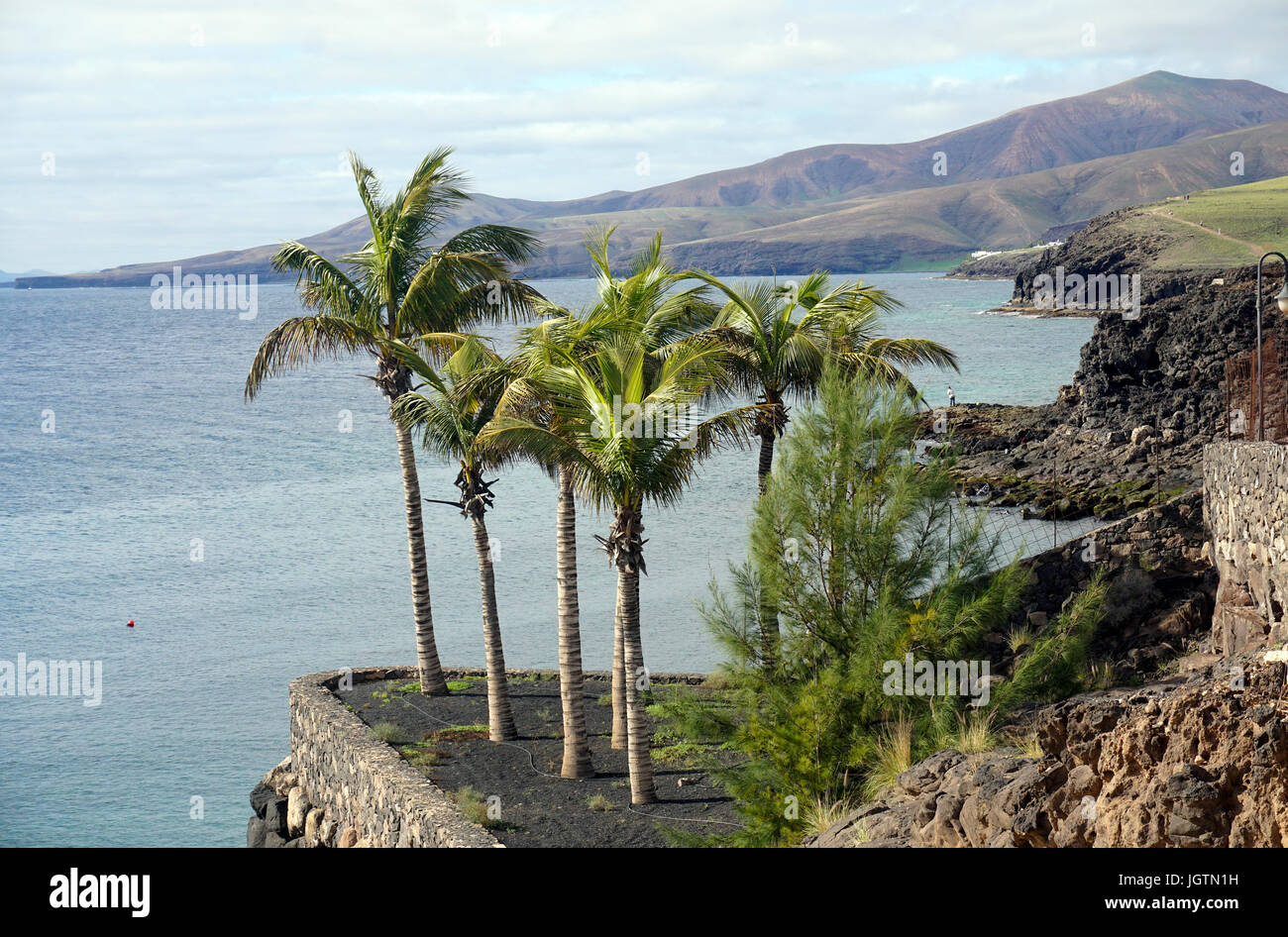 Palm trees at the coast of Puerto Calero, Lanzarote island, Canary islands, Spain, Europe - Stock Image