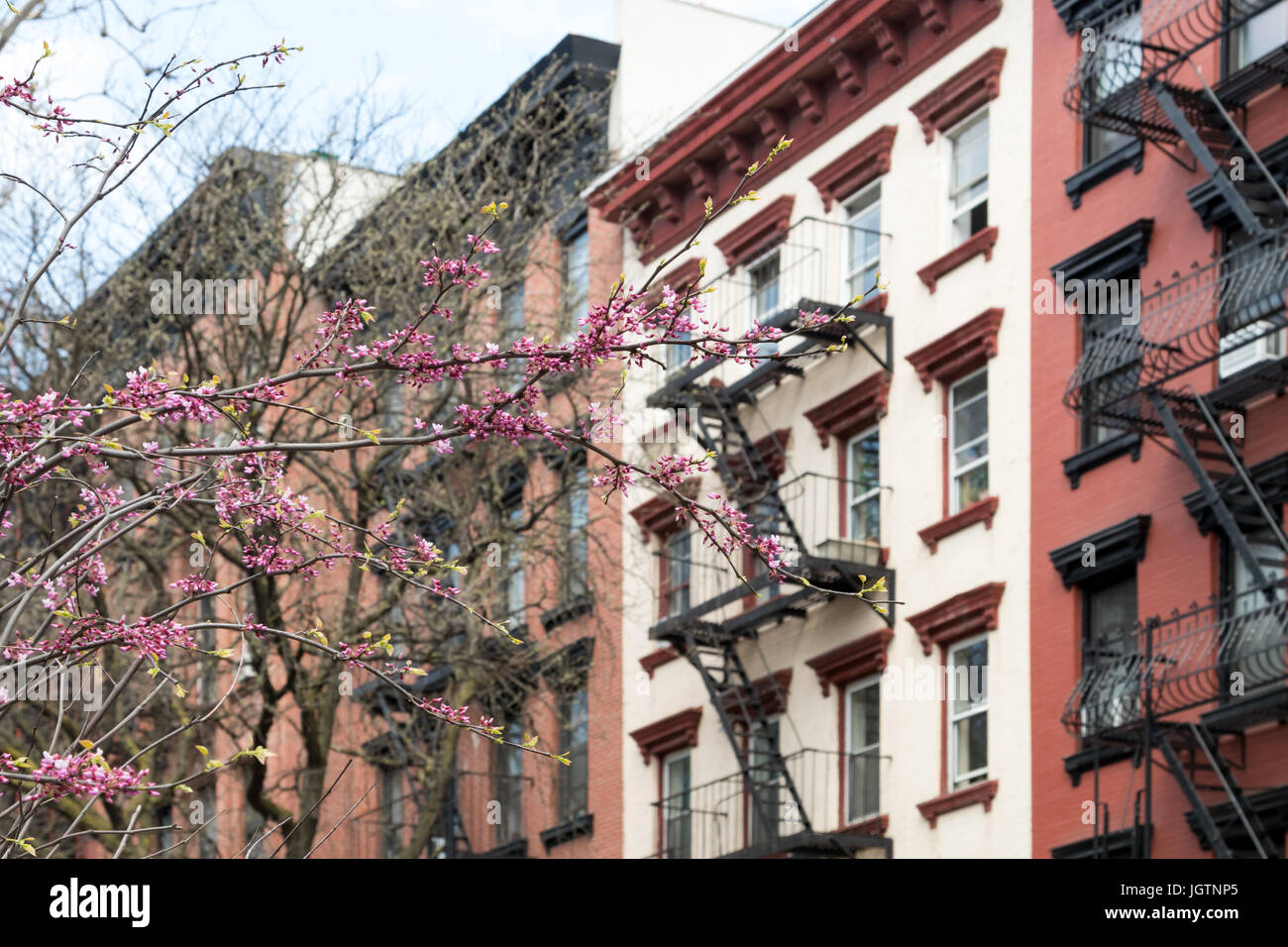 New York City spring street scene with colorful blooming tree and background of old apartment buildings - Stock Image