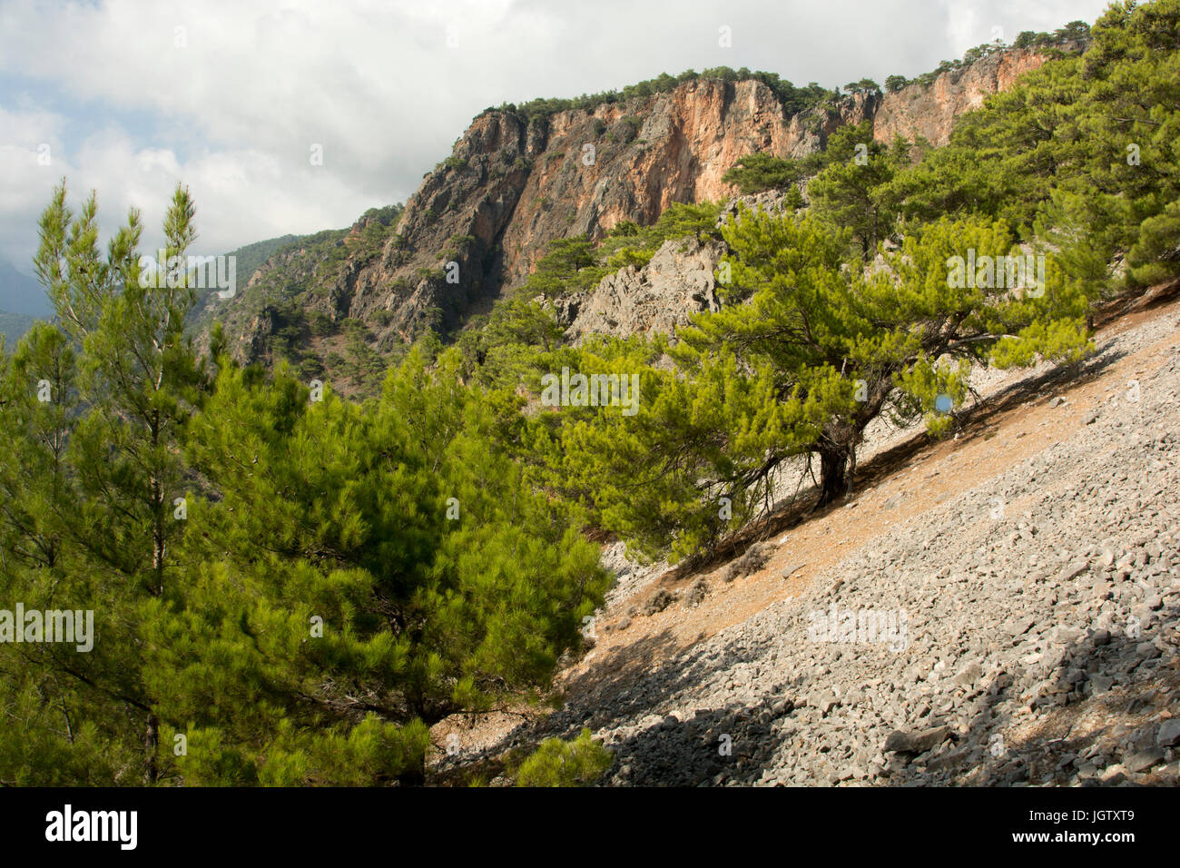 The Turkish Pine is growing around the Mediterranean Coast as here above the southwest coast of Crete. - Stock Image