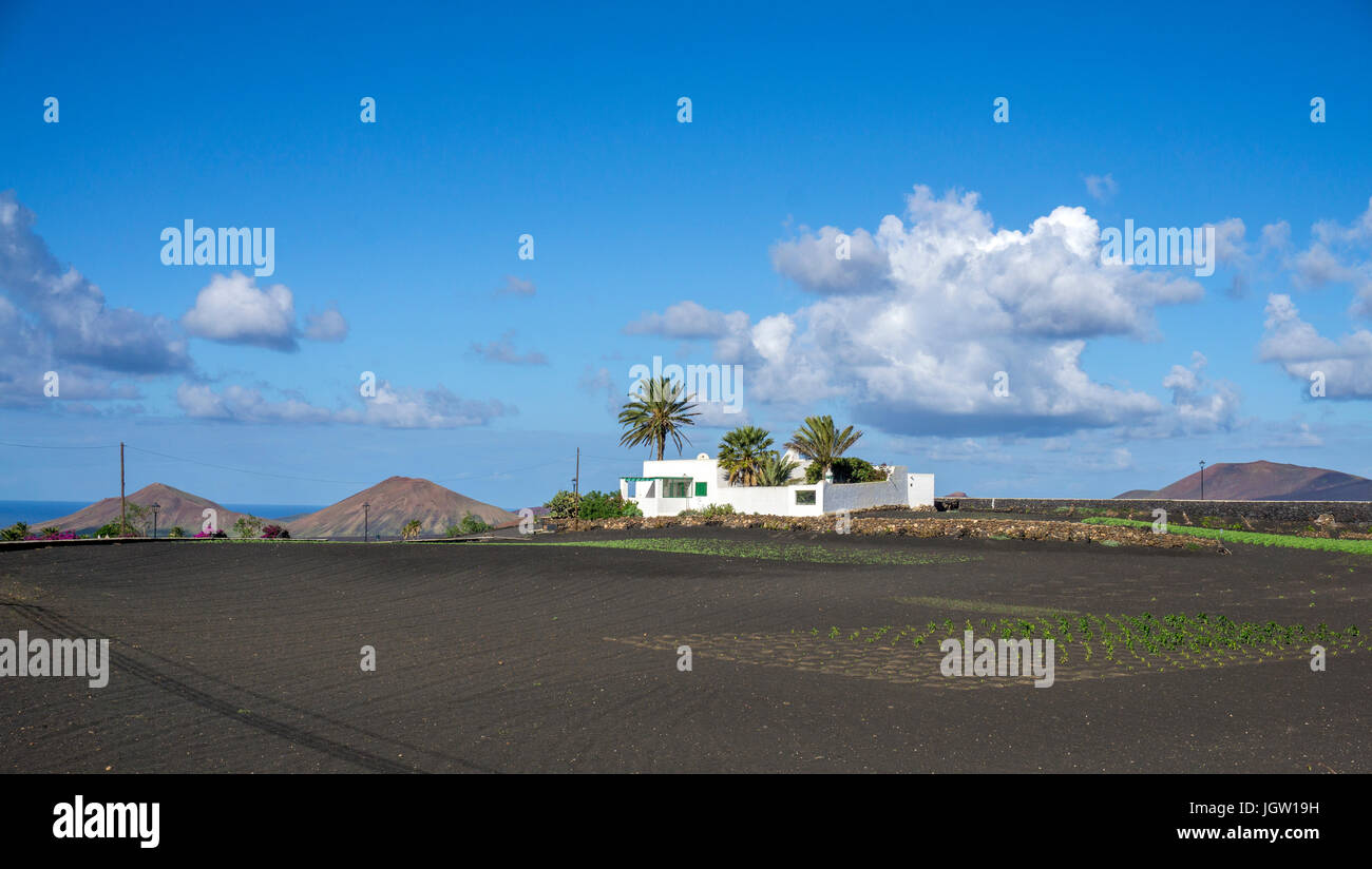 Organic farm, agriculture at Yaiza, Lanzarote island, Canary islands, Spain, Europe - Stock Image