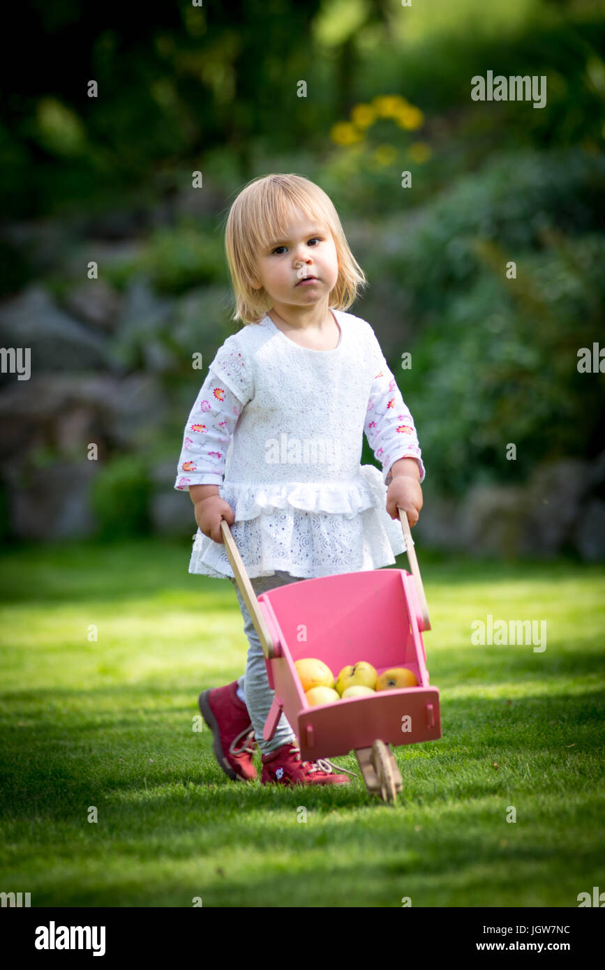 child girl collecting apples with wheelbarrow - Stock Image