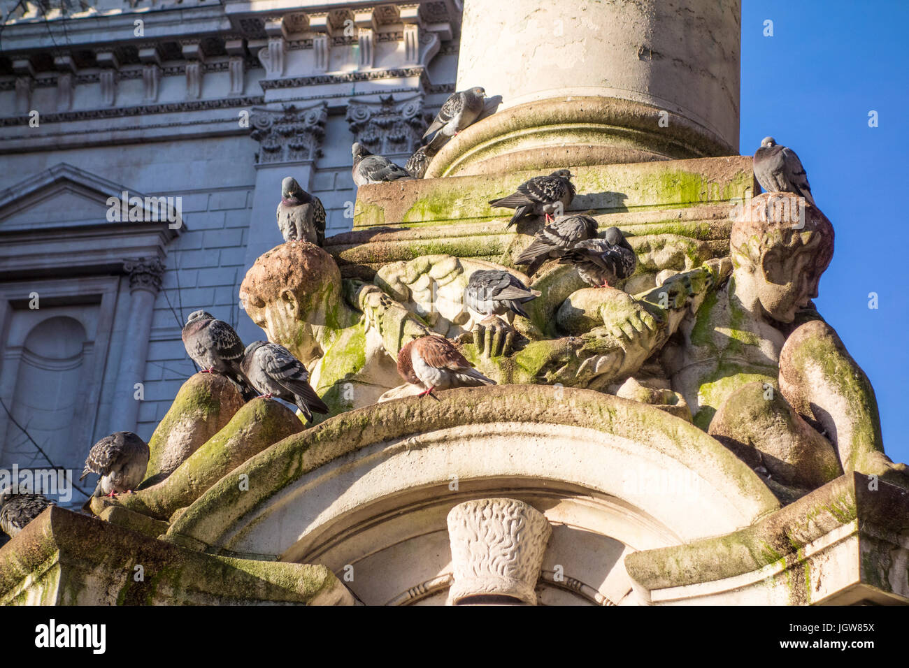 London pigeons (columbidae) roosting on a monument in St Paul's Churchyard, City of London, UK - Stock Image
