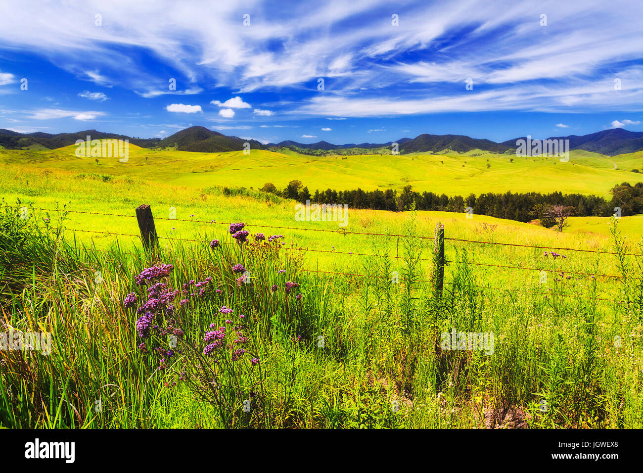 Green lush pasture for cattle on hill ranges of cobark near Barrington tops. Australian agriculture farm producer - Stock Image