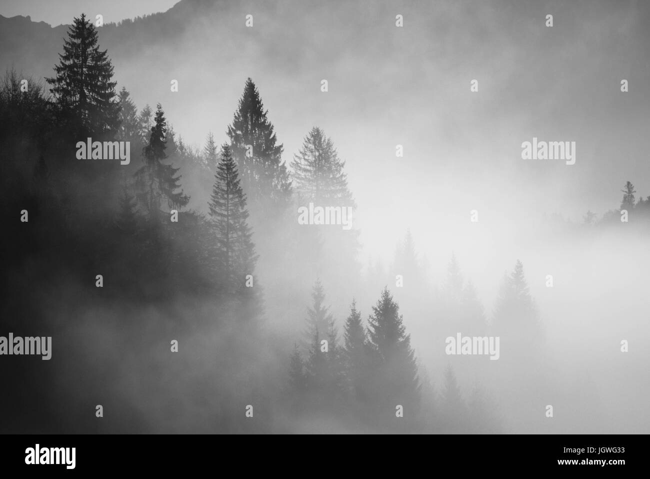 Forest lost in the mist - Stock Image
