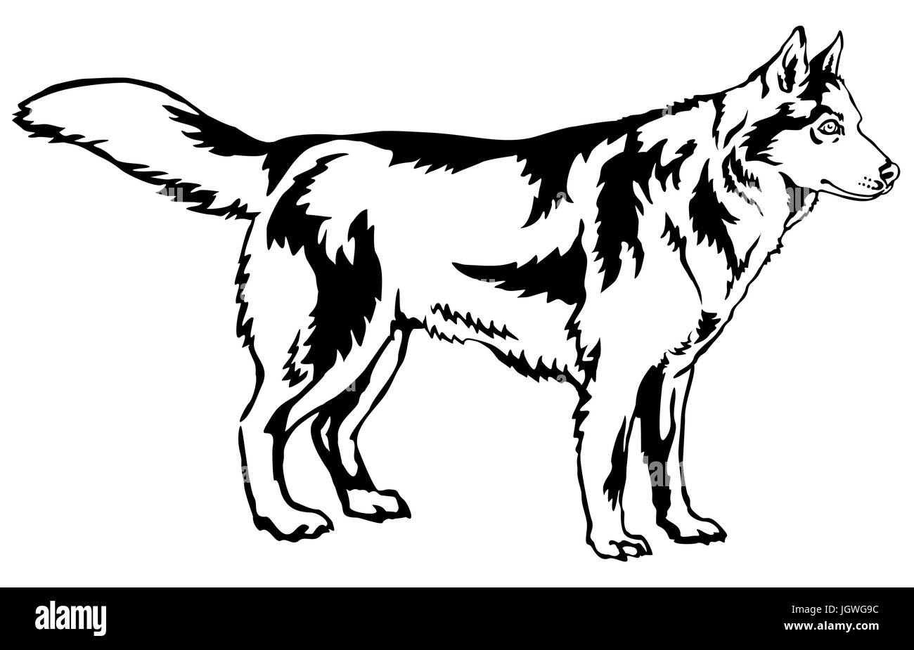 Decorative portrait of standing in profile dog Siberian husky, vector isolated illustration in black color on white - Stock Vector
