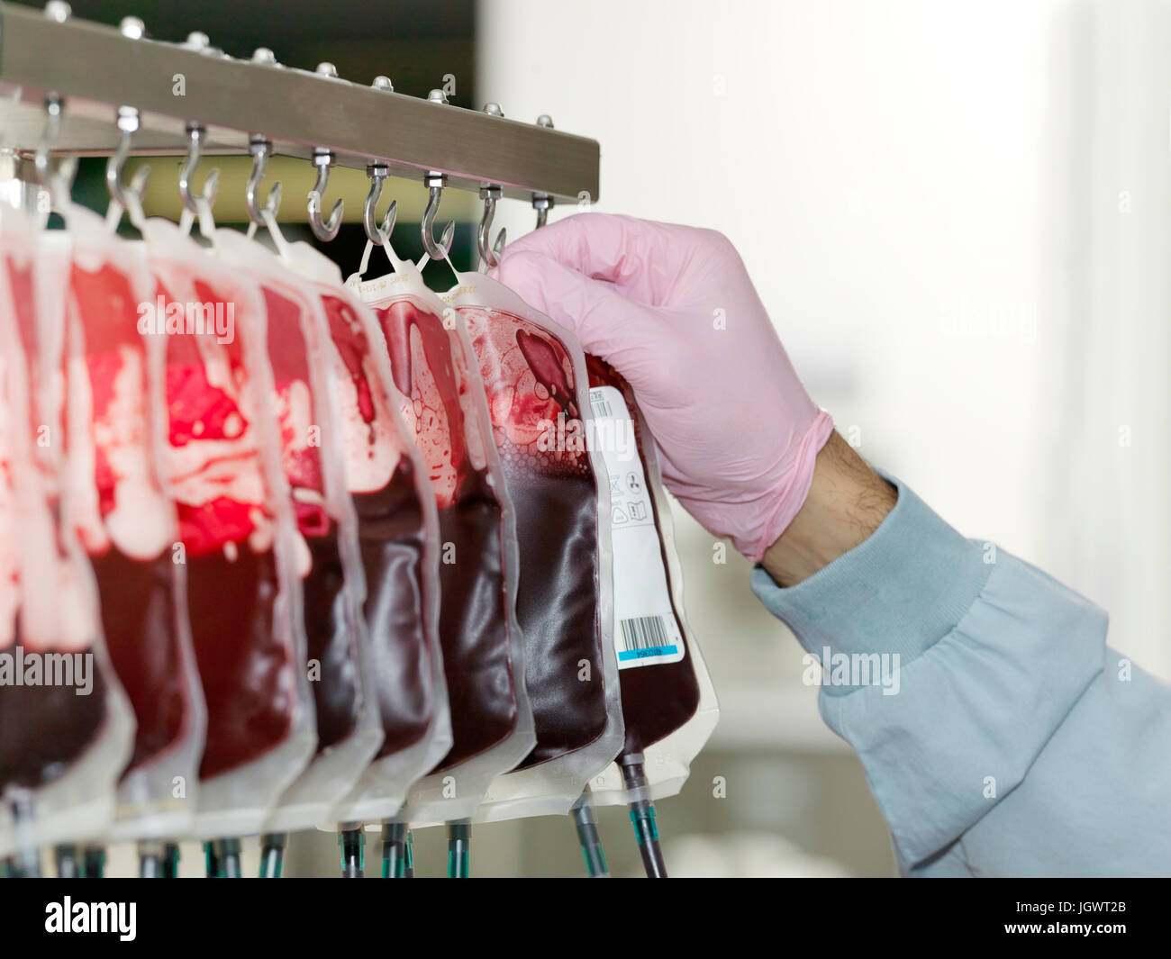 Bags of donated blood hanging in processing facility of blood bank - Stock Image
