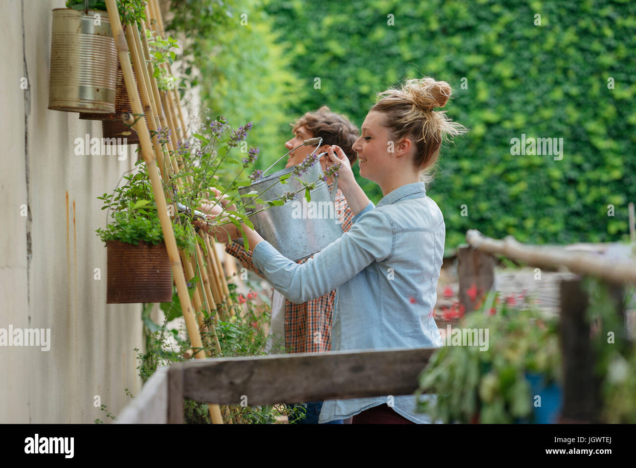 Young man and woman tending to plants growing in cans, young woman watering plants using watering can - Stock Image