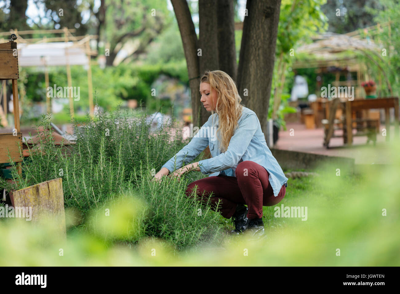 Young woman tending to plants in urban garden - Stock Image