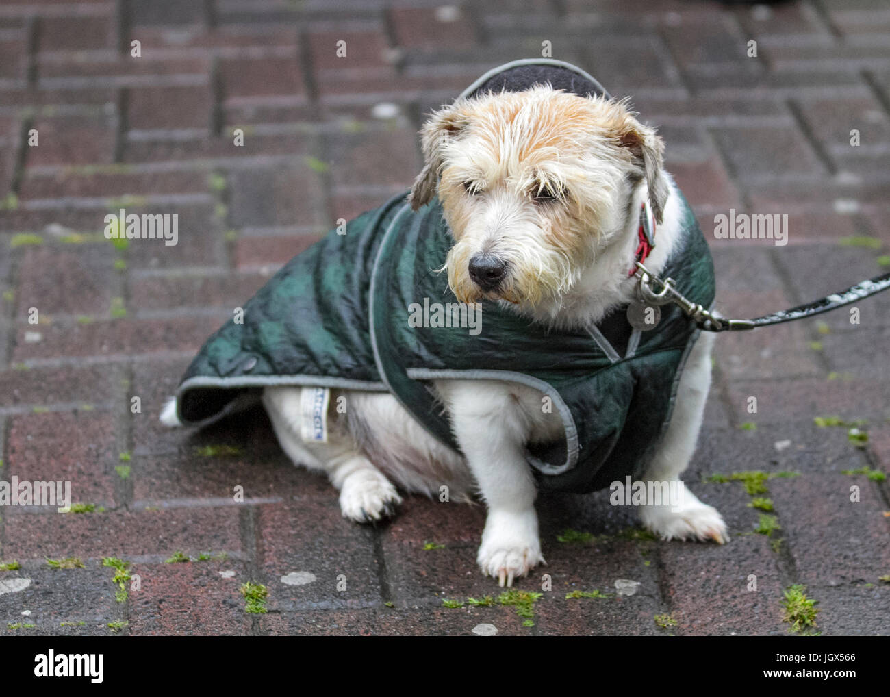 Preston, Lancashire, UK. UK Weather. 11th July, 2017. Heavy and persistent rain in the city, with a forecast for - Stock Image