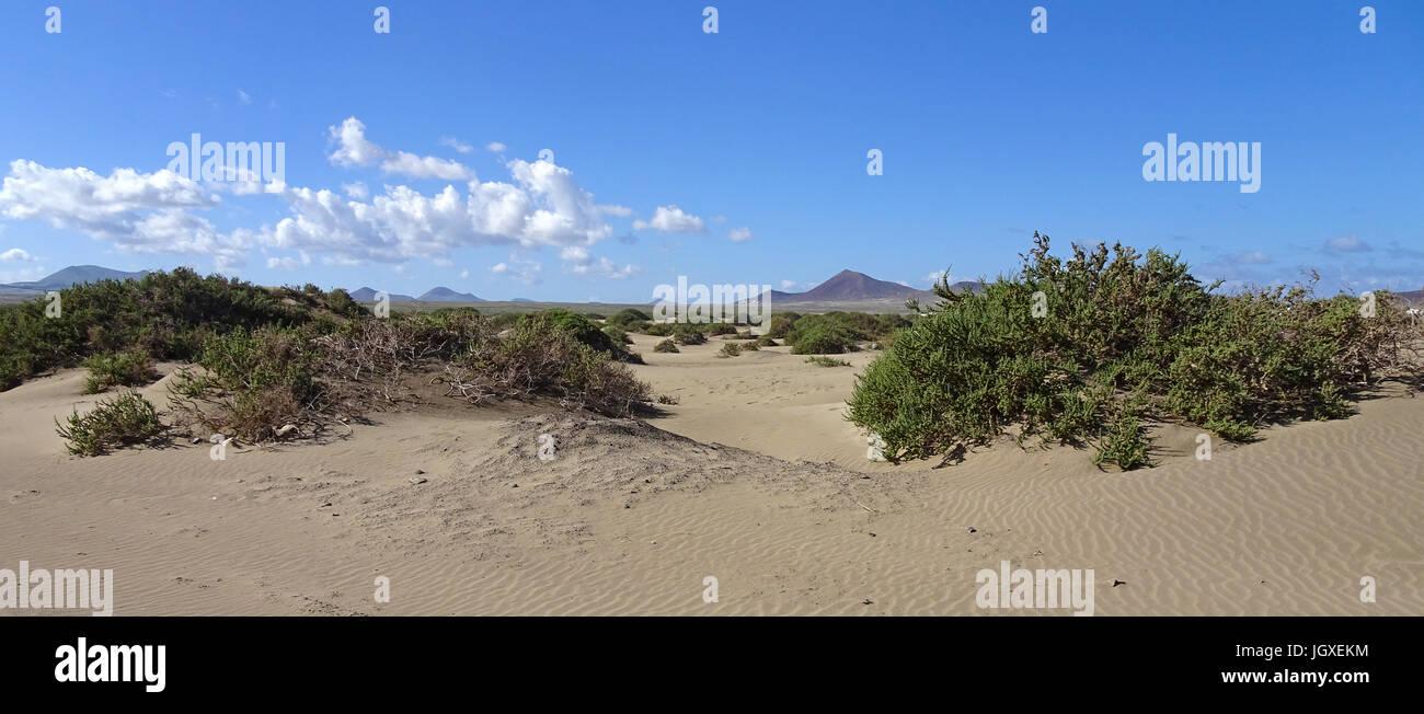 Sandduenen am Playa de San Juan, La Caleta de Famara, Lanzarote, Kanarische Inseln, Europa | Sand dunes at Playa - Stock Image