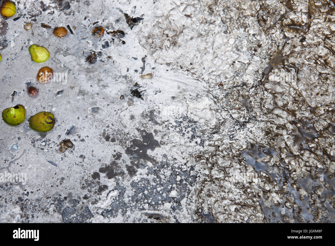 A layer of grey mould formed on the water surface of a bin used to drown perennial garden weeds. Alternative method - Stock Image
