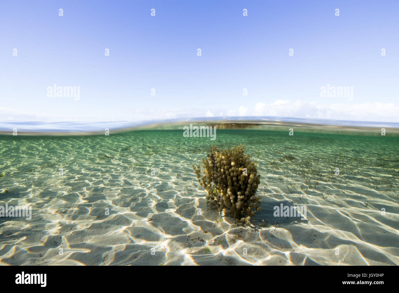 Above and under a pristine ocean environment on the Eyre Peninsula, Australia. - Stock Image