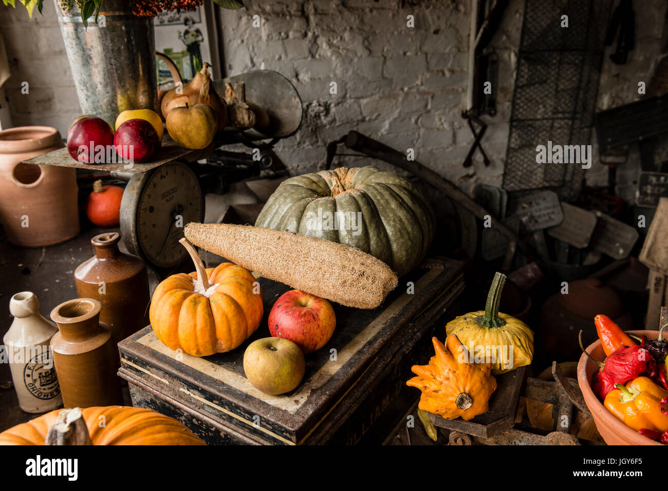 Still life of carefully arranged various types of pumpkins and fruits in a garden shed for display Stock Photo
