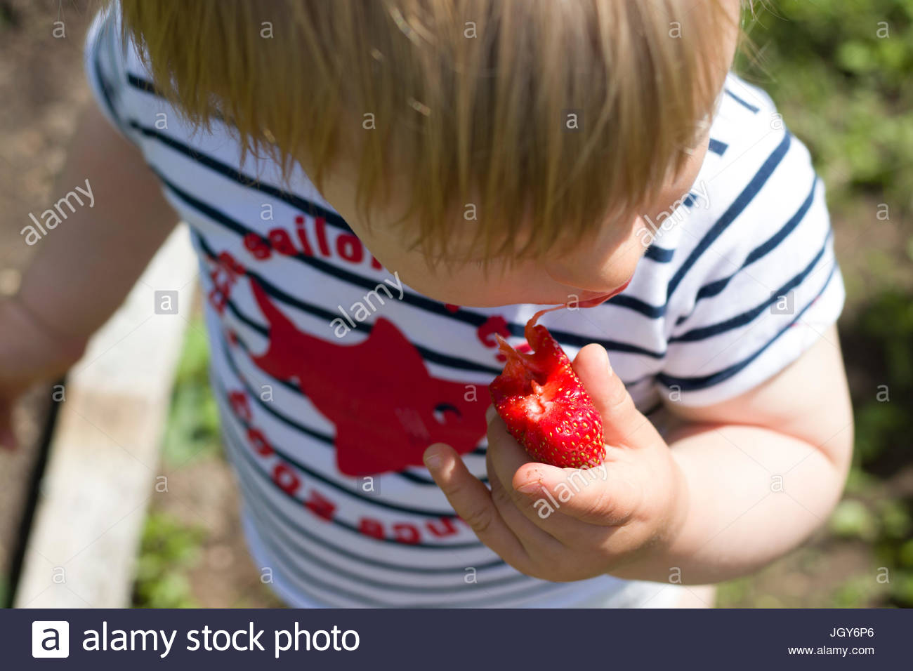 Boy eating a strawberry - Stock Image