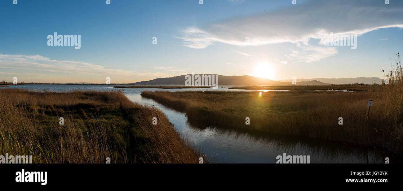 Delta de l'Ebre scenery. Rural view at Delta de l'Ebre.  Rice field, River Ebro Landscape, Catalonia, Spain Stock Photo