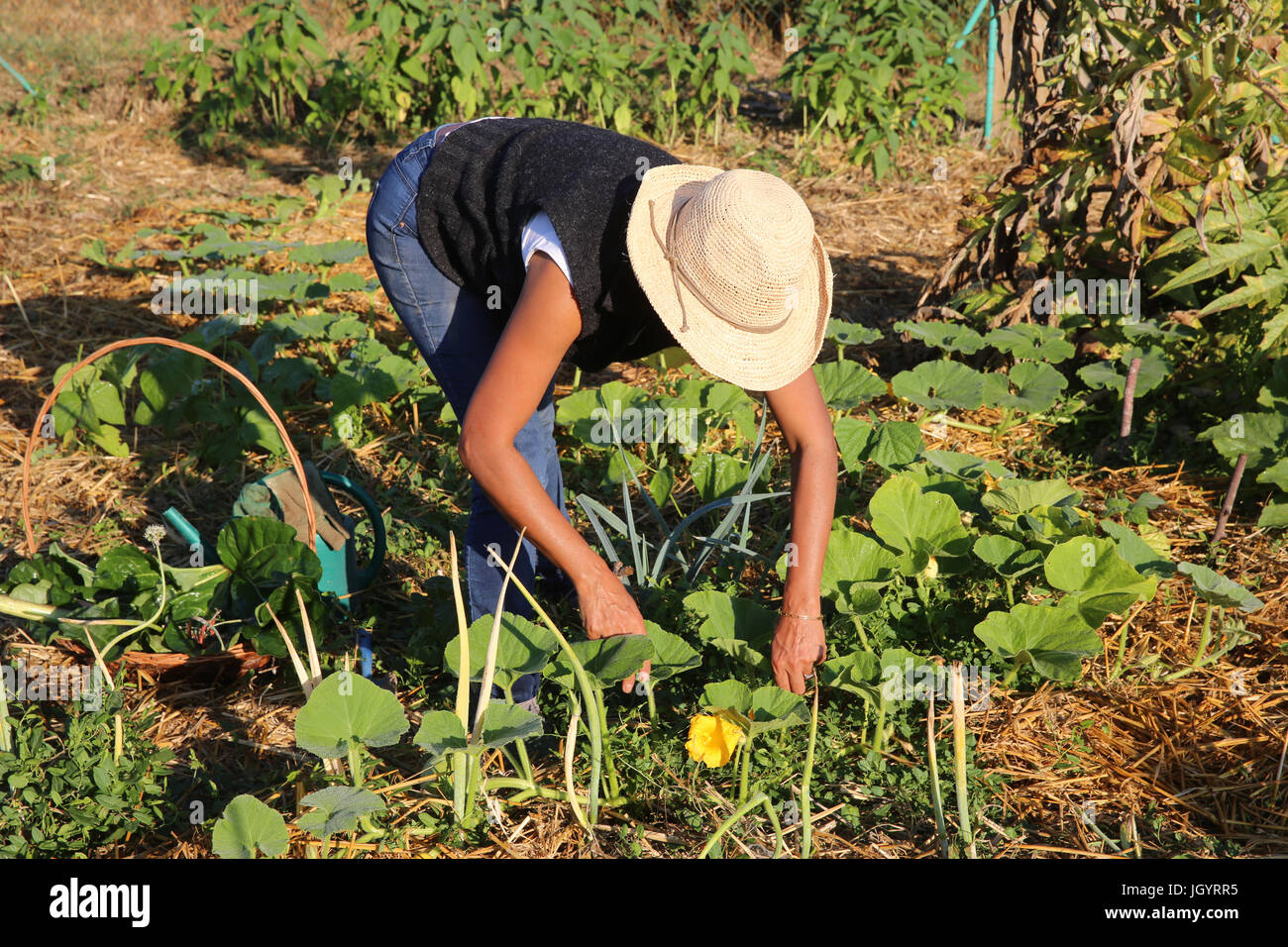 Woman working in her vegetable garden. France. - Stock Image