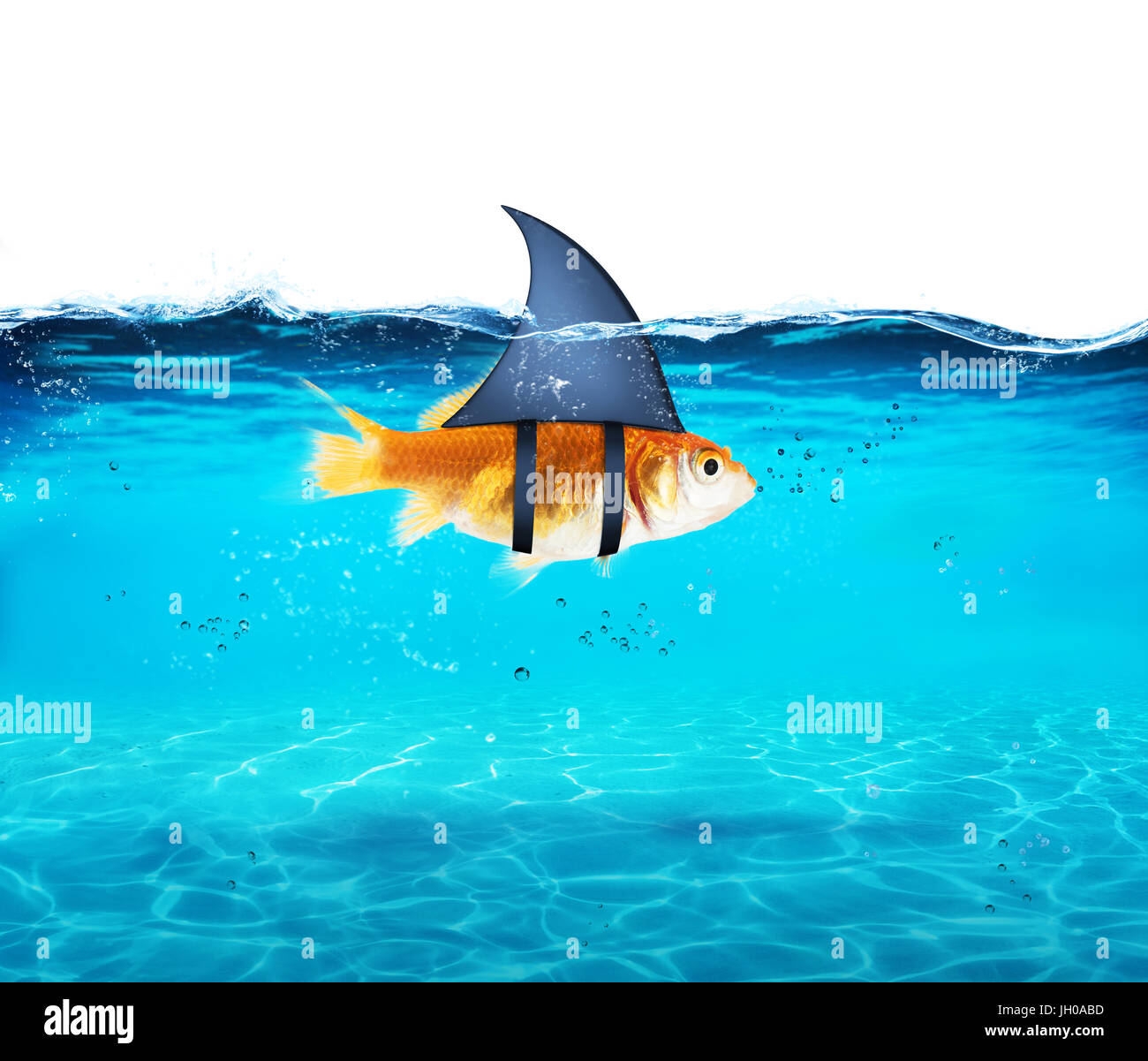 Goldfish acting as shark to terrorize the enemies. Concept of competition and bravery - Stock Image