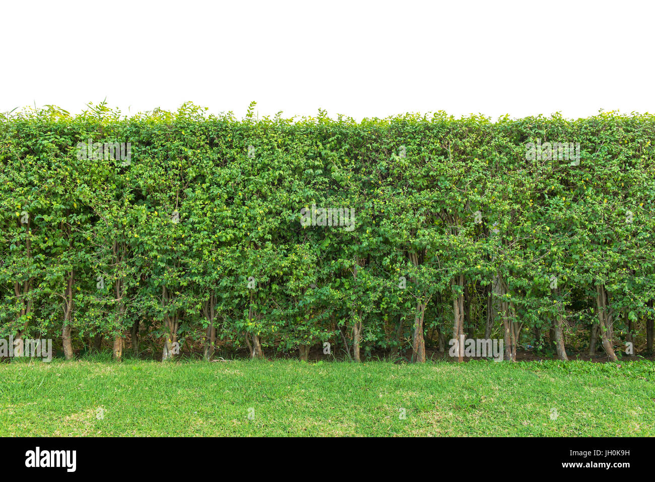 hedge fence stock photos hedge fence stock images alamy