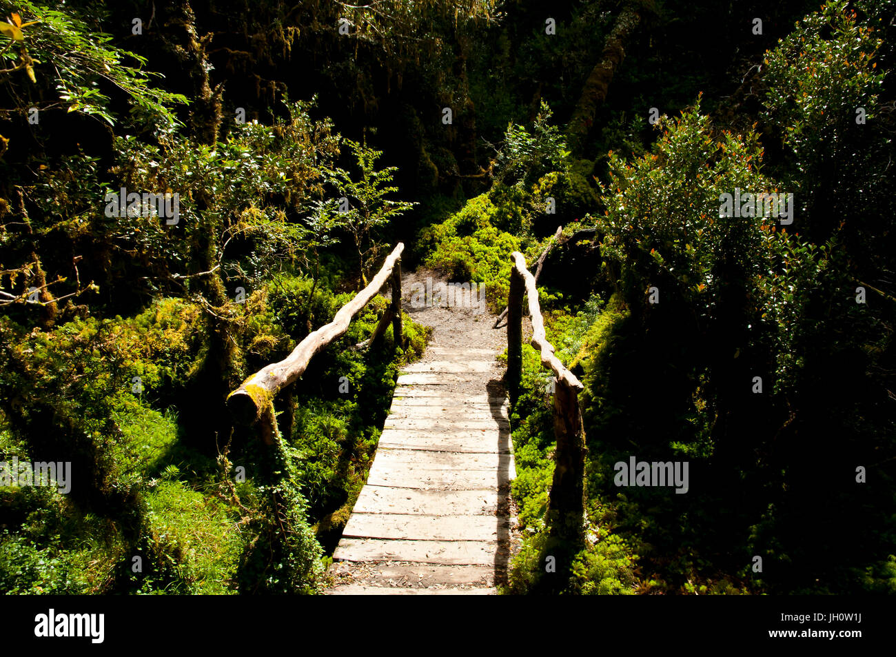 Enchanted Forest - Queulat National Park - Chile Stock Photo
