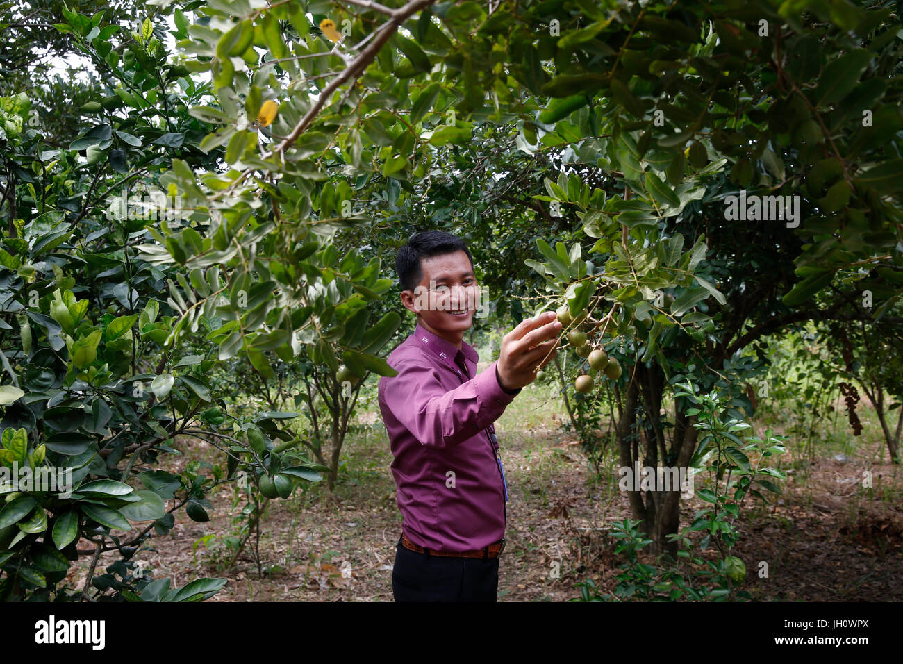 Tor Chanratana, AMK microfinance branch manager, in a client's orchard. Cambodia. - Stock Image