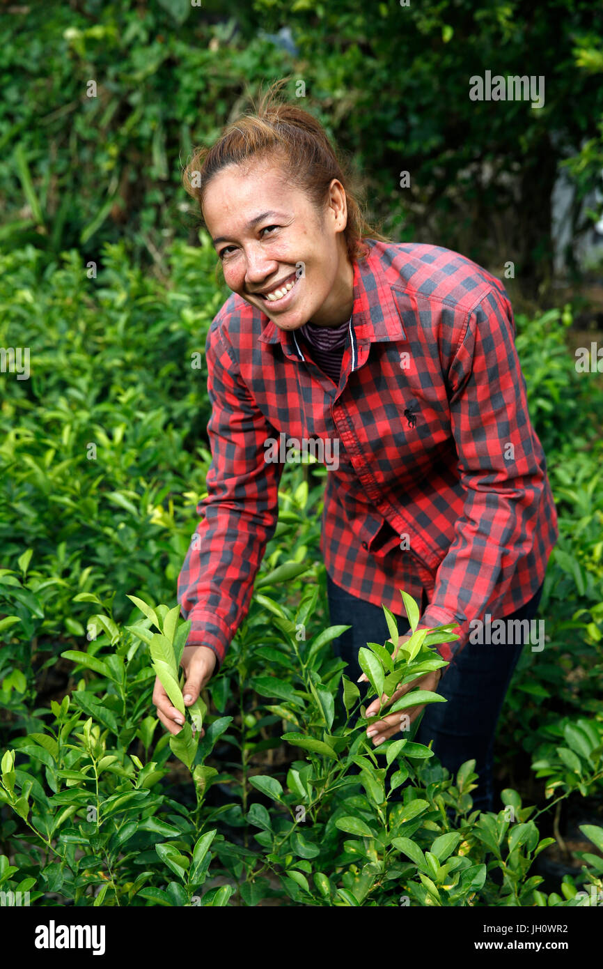 Dany Song uses a U.S.$500 loan from AMK microfinance (her fifth loan) to run a nursery. Cambodia. - Stock Image