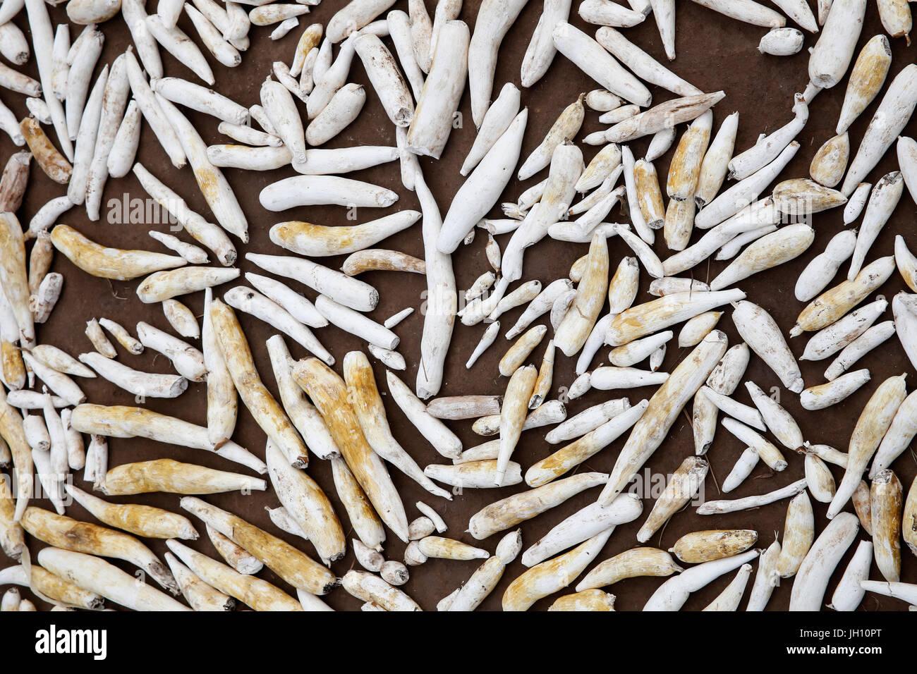 Cassava. Uganda. - Stock Image
