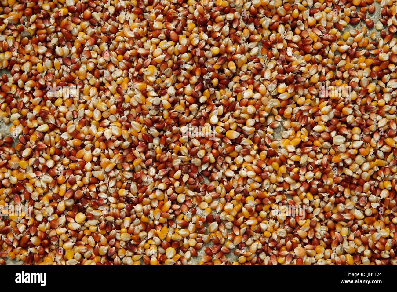 Corn. Uganda. - Stock Image
