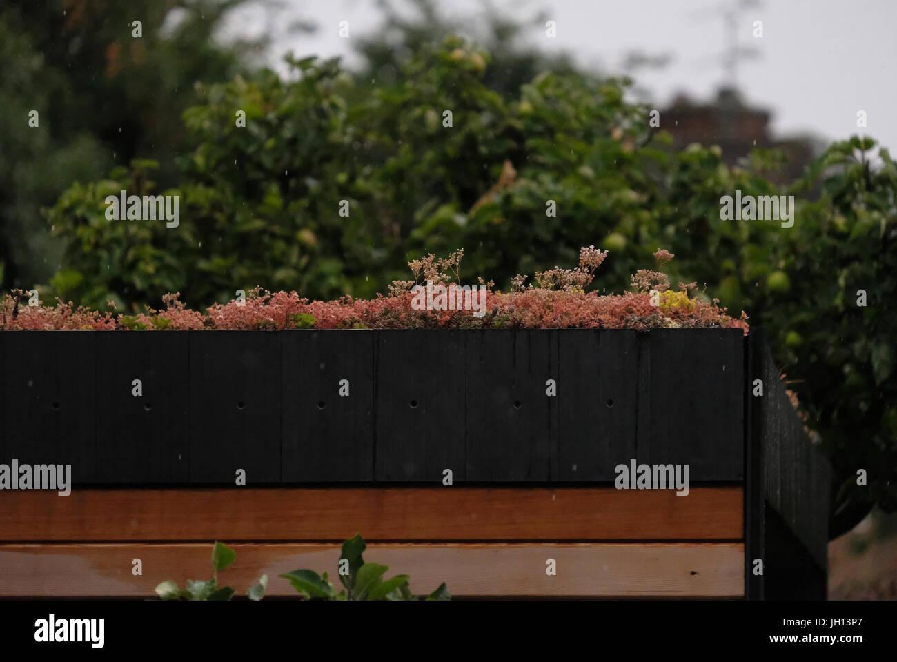 Living sedum roof - Stock Image