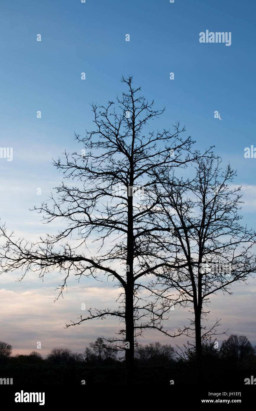 Silhouetted Trees Against Partly Cloudy Sky Backdrop With Crescent Moon-Menomonee River Parkway - Stock Image