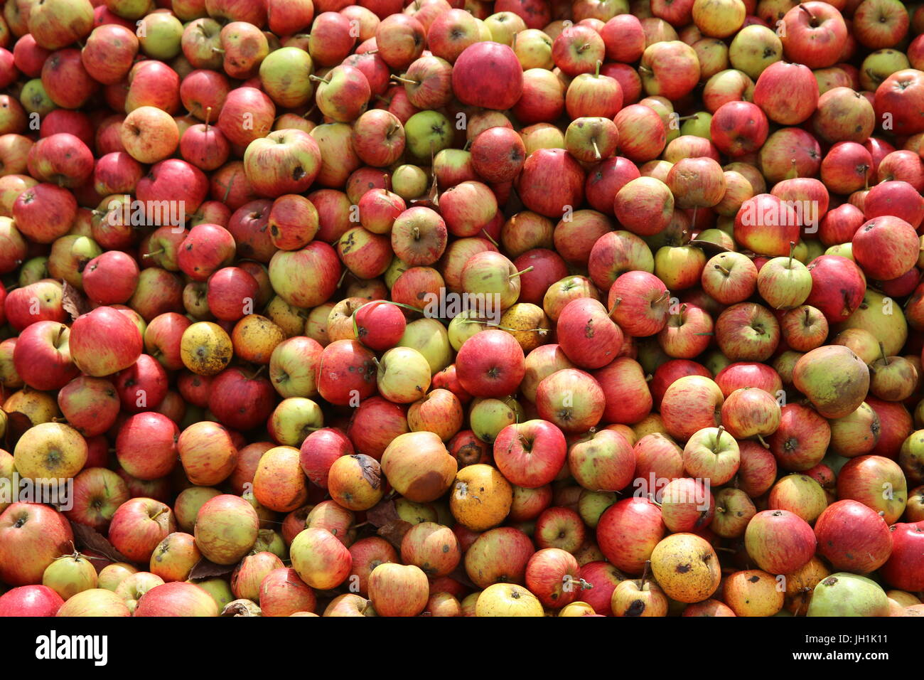 Apples. France. - Stock Image