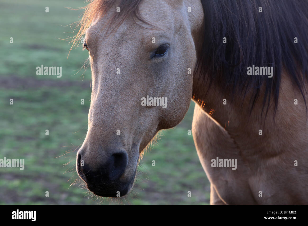 Horse in a field. France. - Stock Image