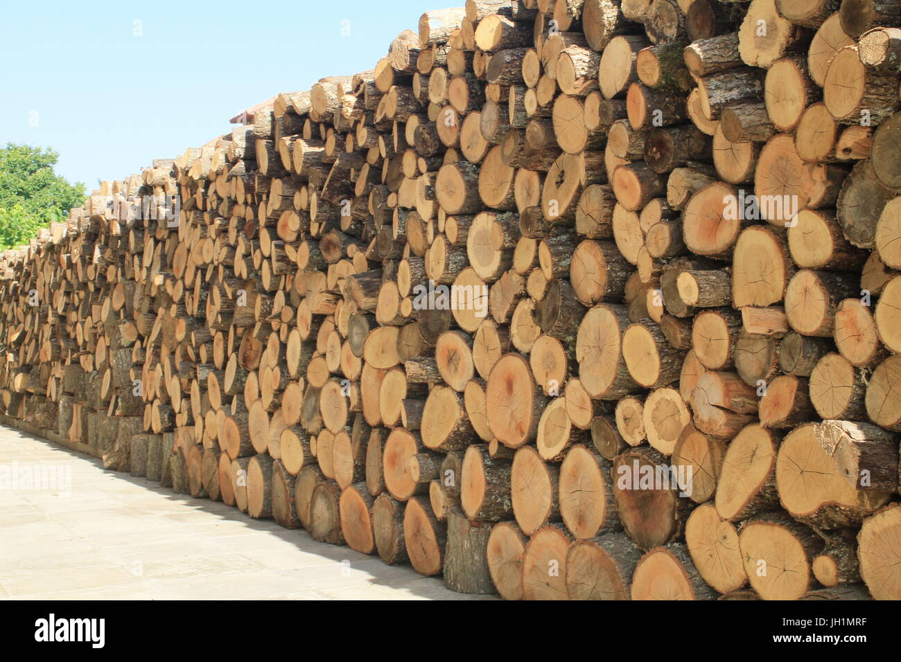 A firewood wall, logs piled high and long to dry in the sun. Stock Photo