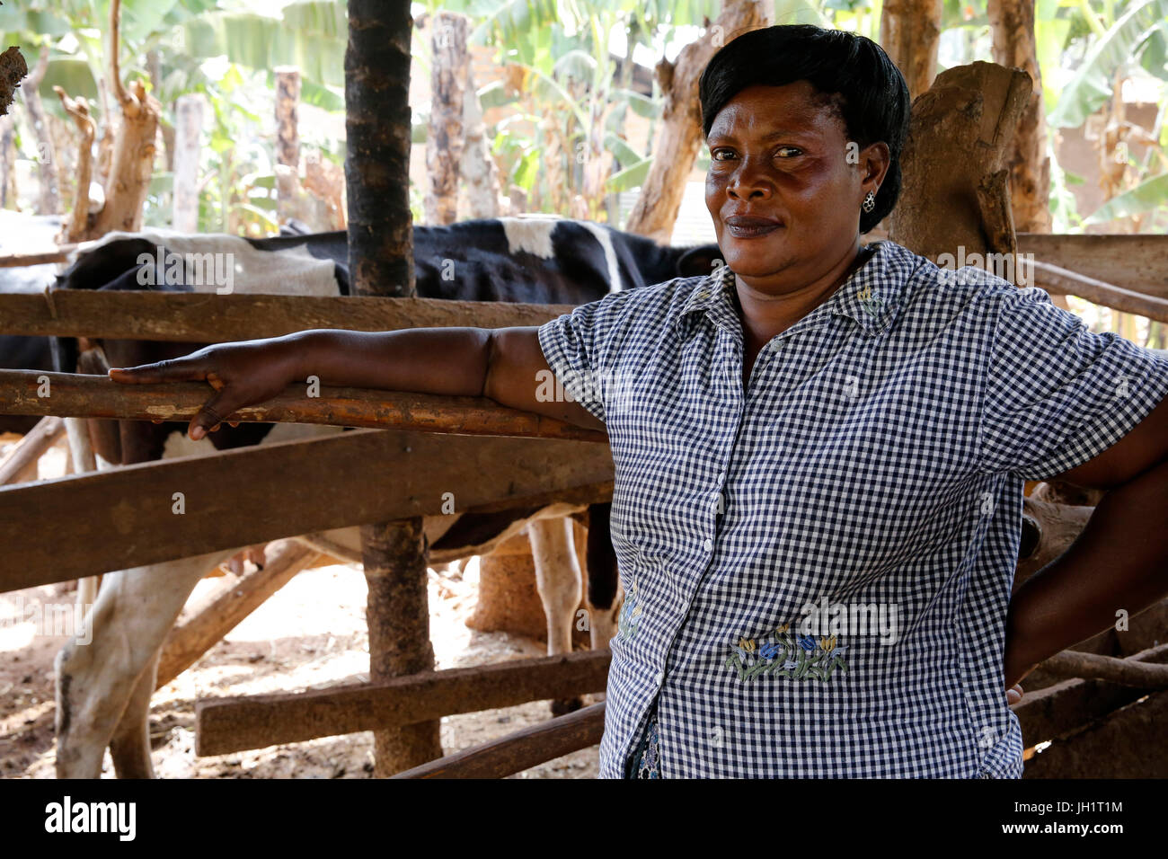 Cattle and poultry breeder Margret Isingoma received a 7 million UGS loan from ENCOT microfinance. Uganda. - Stock Image