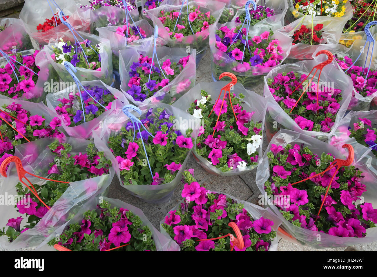Spring Flowers For Sale At The Sunday Morning Market France Stock