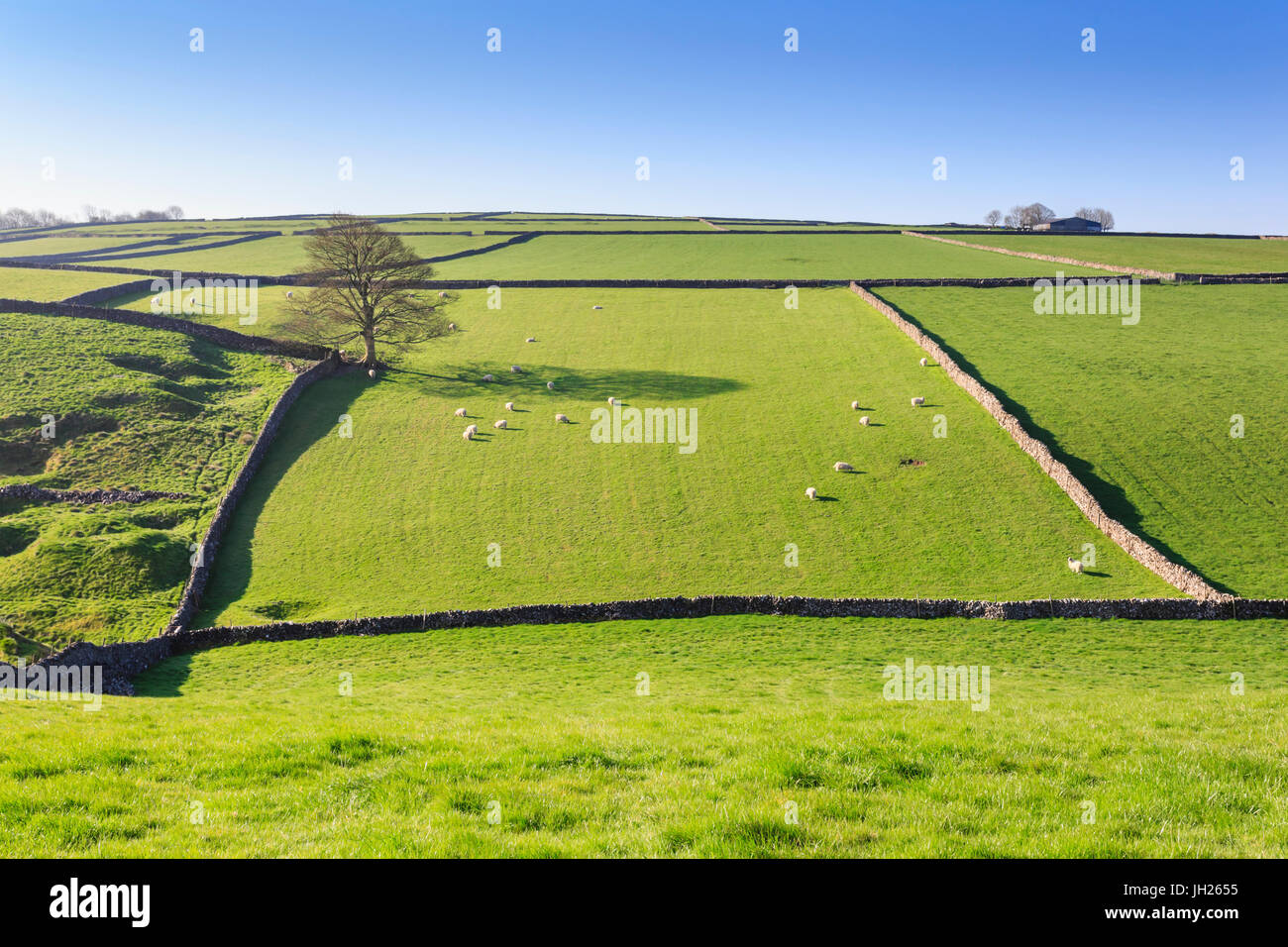 Sweeping landscape featuring dry stone wall in spring, Peak District National Park, near Litton, Derbyshire, England, - Stock Image