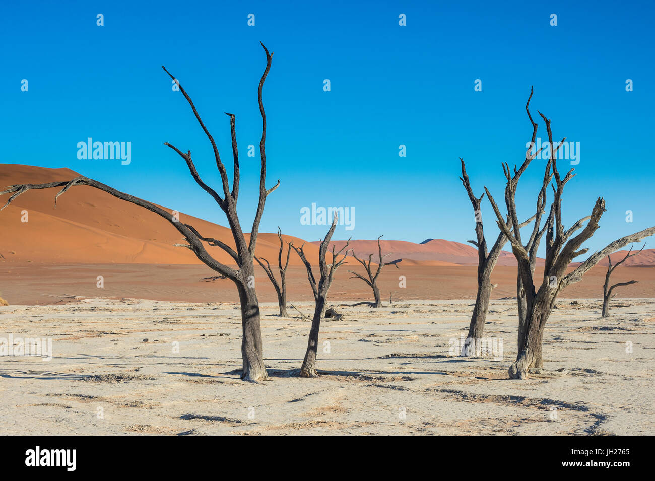 Deadvlei, an old dry lake in the Namib desert, Namibia, Africa - Stock Image
