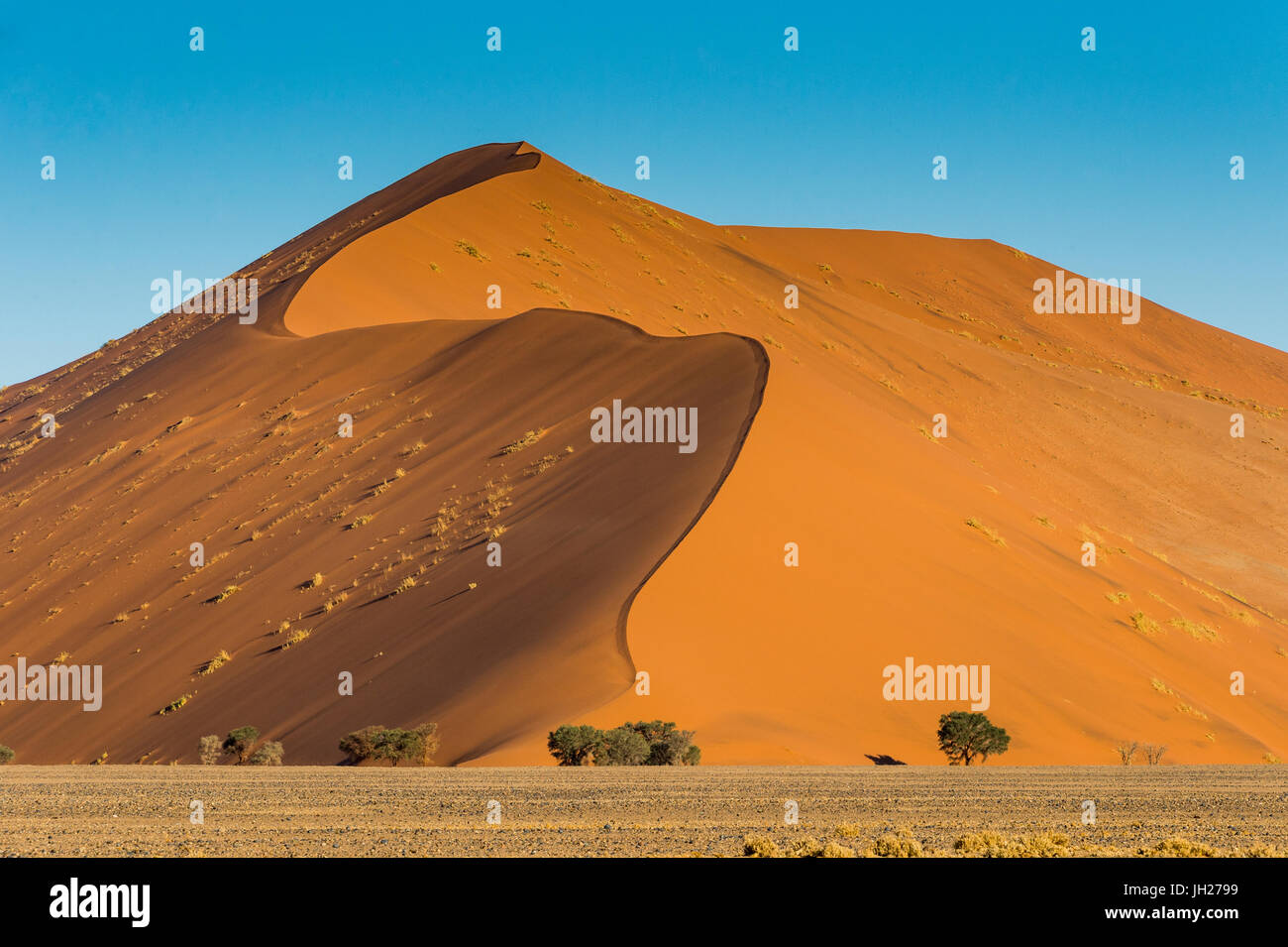 Giant Sand Dune 45, Sossusvlei, Namib-Naukluft National Park, Namibia, Africa Stock Photo