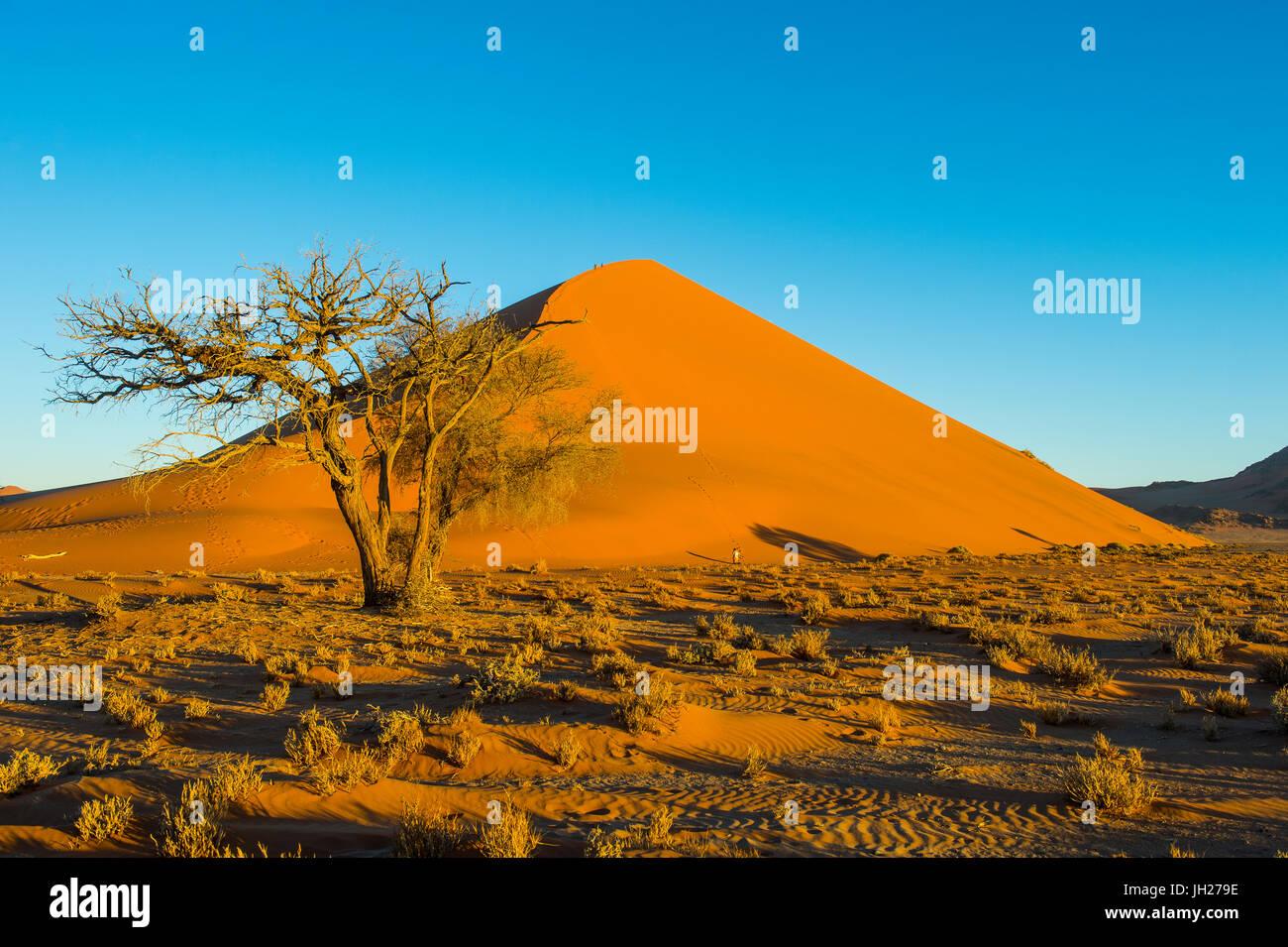 Giant Sand Dune 45, Sossusvlei, Namib-Naukluft National Park, Namibia, Africa - Stock Image