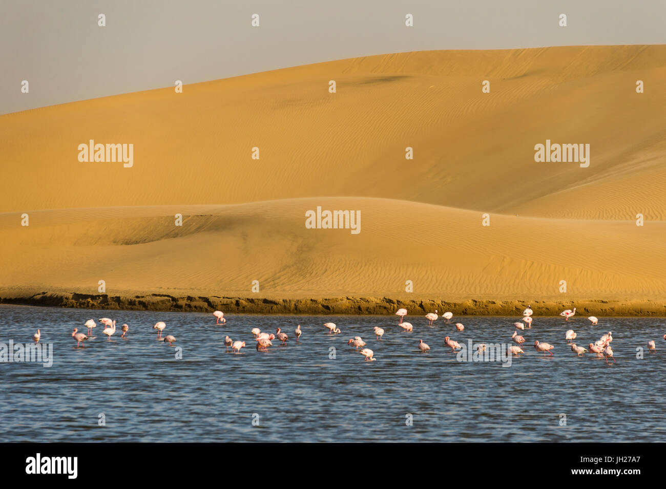 Saltwater pool with flamingos near Walvis Bay, Namibia, Africa - Stock Image
