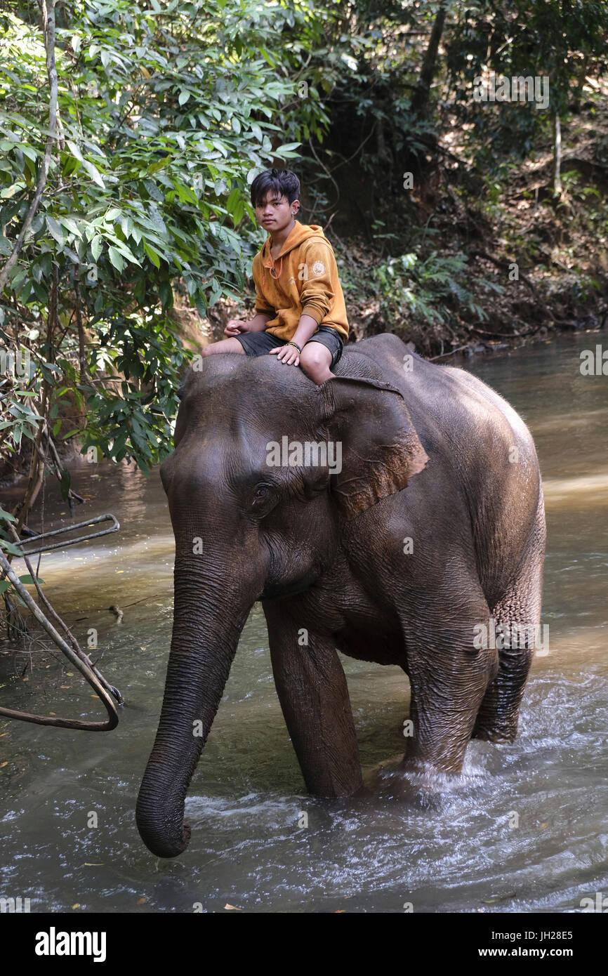 Mahoot riding elephant, Elephant Sanctuary, Mondulkiri, Cambodia, Indochina, Southeast Asia, Asia - Stock Image