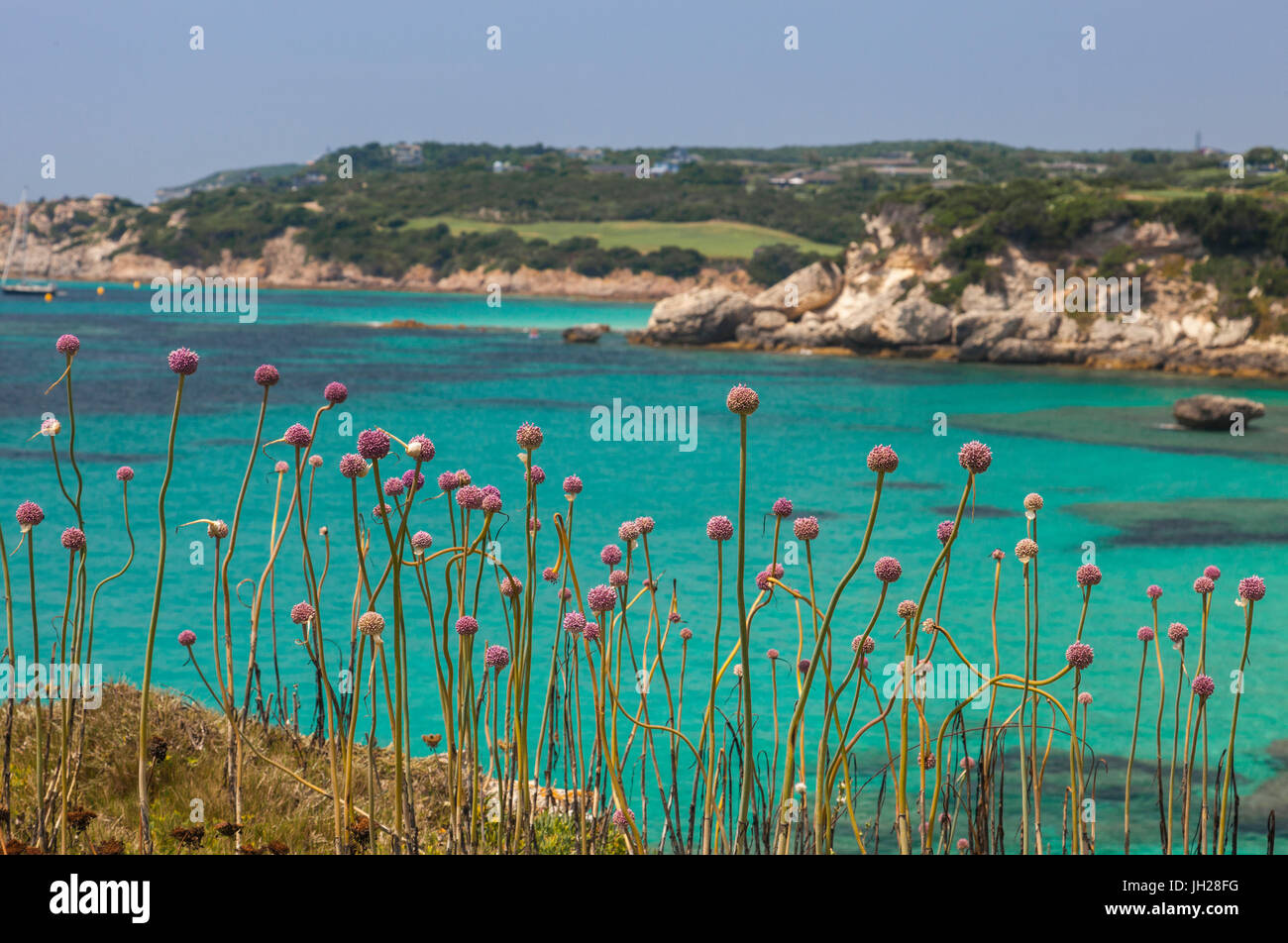 Pink flowers of the inland frame the turquoise sea in summer, Sperone, Bonifacio, South Corsica, France, Mediterranean, - Stock Image
