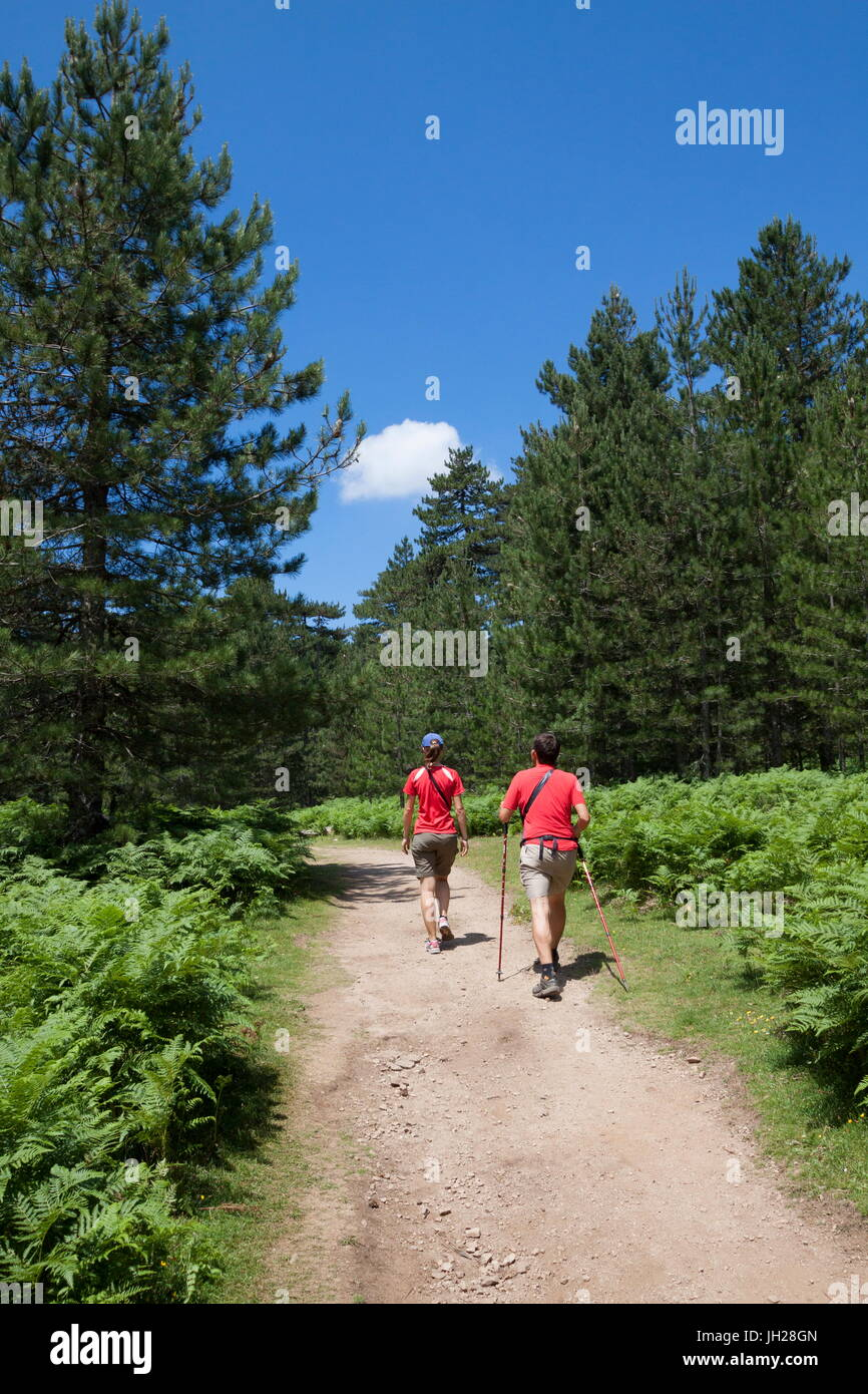 Hikers proceed on the path in the green woods of Col de Bavella (Pass of Bavella), Solenzara, Southern Corsica, - Stock Image