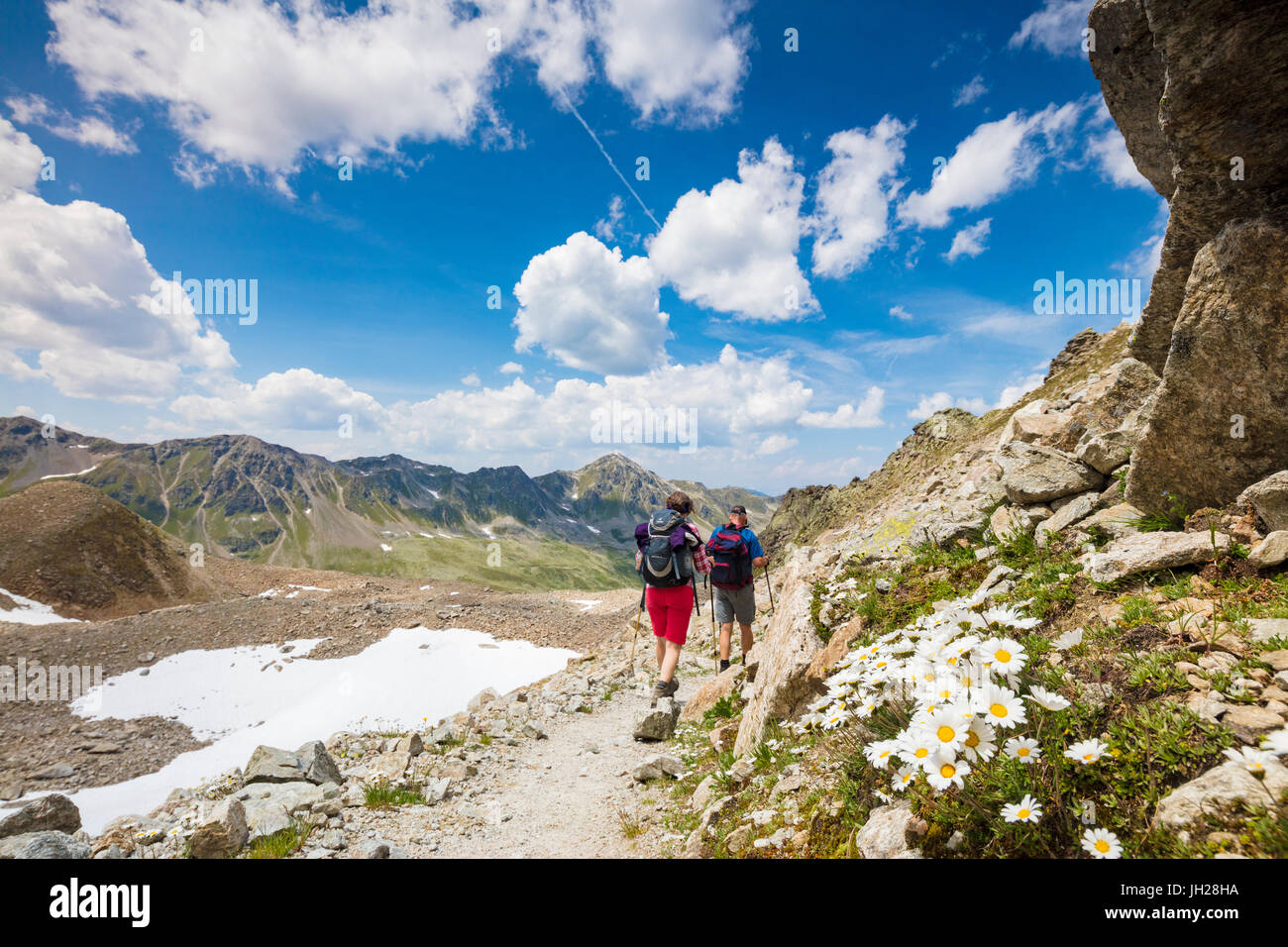 Hikers surrounded by rocky peaks and flowering daisies, Joriseen, Jorifless Pass, canton of Graubunden, Engadine, - Stock Image