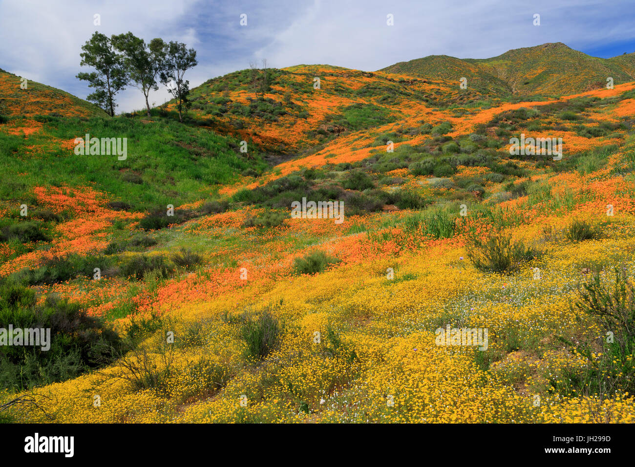 Walker Canyon, Lake Elsinore, Riverside County, California, United States of America, North America - Stock Image